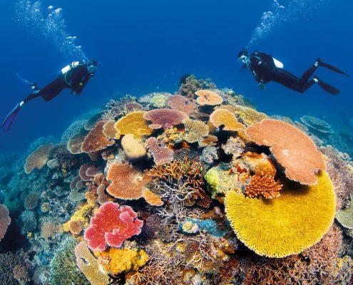 Grande Barrière de Corail - Ribbon Reefs; Coral Sea