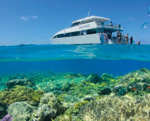 calypso-opal-reef-portdouglas-reves-australie