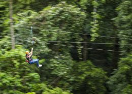 jungle-surfing-canopy-tour-reves-australie
