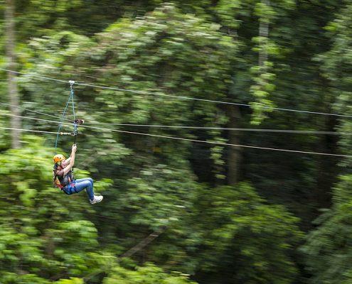 jungle-surfing-canopy-tour-reves-australie