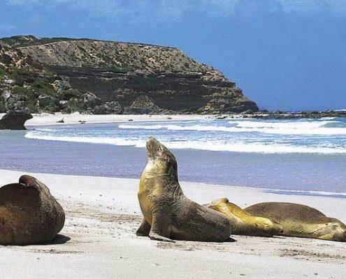 cccf-kangaroo-island-reves-australie