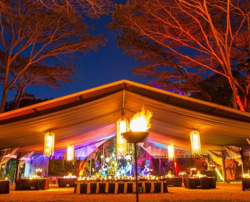 flames-forest-reves-australie