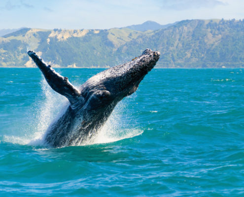 croisiere-dobservation-des-baleines-a-sydney